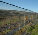 Fruit Cage Netting from 2m x 2m
